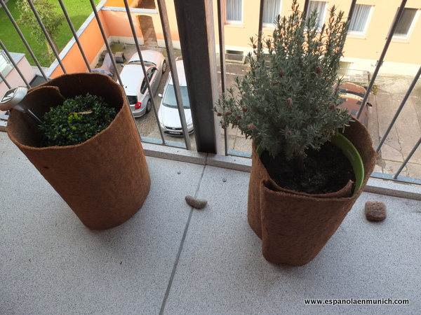 Proteger las plantas contra el fr o una espa ola en m nich - Bauhaus macetas ...